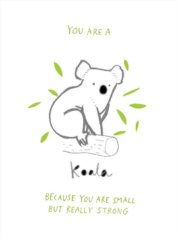 australian_animals_koala.jpg